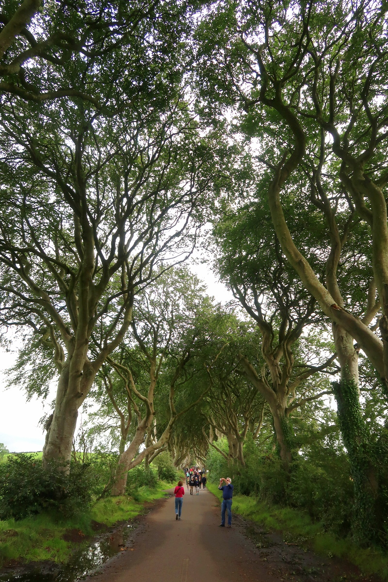 Irlande du Nord - The dark hedges